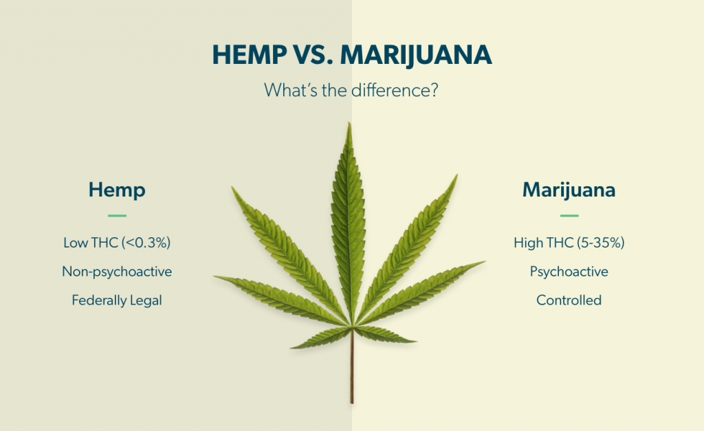CBD Business - Hemp vs. Marijuana